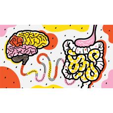 10 любопытных фактов про связь кишечника и мозга